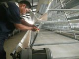 A galinha do equipamento de cultivo das aves domésticas prende a maquinaria de exploração agrícola com bebedor do bocal