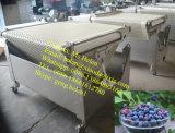 ウェイティングのパッキングラインをソートするブルーベリーのソート機械ブルーベリー
