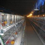 Il pollo caldo della pollastra della griglia di strato di vendita mette in gabbia il sistema della strumentazione dell'azienda avicola