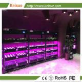 I KES verticali 6.0 dell'azienda agricola di Keisue con lo spettro completo LED coltivano l'indicatore luminoso