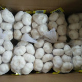 Chinese Red/Normal White/Pure White Wholesale FRESH Garlic