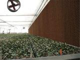 Almofada refrigerar evaporativo do favo de mel do equipamento 7090 das aves domésticas da estufa de Guangdong