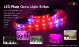 Полная прокладка освещения выращивания растения спектра с цветом Red&Blue