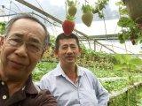 Unigrow organisches durch Mikrobendüngemittel auf dem Erdbeere-Pflanzen