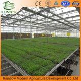 低価格および効率的な温室のHydroponicsシステムSeedbed