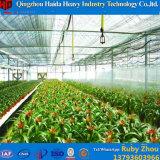 Glace de serres chaudes de jardin utilisée pour la fleur