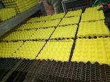 صغيرة [ببر بولب] قولبة بيضة صينيّة علبة يجعل آلة