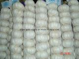 2018 Nouvelle récolte sac blanc à l'exportation de l'ail frais avec sac de maillage