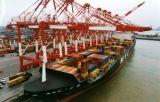 Надежные море логистики с передового опыта обслуживания Китая агента в Джакарте
