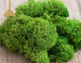 La Chine la plupart Popuplar Everlasting Moss : la clé de murs végétaux