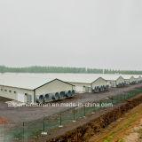 De lichte Bouw van het Landbouwbedrijf van het Gevogelte van de Structuur van het Staal met Al Apparatuur Prodution