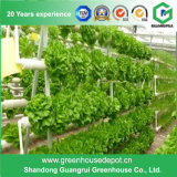 Serre chaude hydroponique pour l'usine de fruits et légumes
