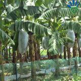 Tecido não tecido de PP para cobertura de agricultura