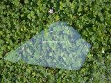 Стекло плоского Polished ящика полки индикации края стеклянного стеклянное Tempered