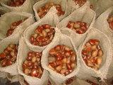 Europa Profissional de exportação chineses castanheiro fresca