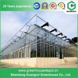 Fornitore della serra della Cina con l'alta qualità