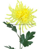 Fake chrysanthème fleur véritable à la recherche de Boutique décorer