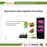 Azienda agricola verticale popolare delle piante della famiglia urbana