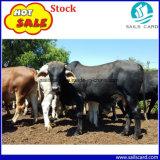 Marque d'oreille animale de bétail en plastique pour la vache
