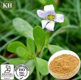 Pure Bacopa Monniera Extraia 20%, 50% Bacopasides
