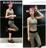 O terno novo de 2017 esportes, calças dos esportes, ostenta a parte superior, vestuário dos esportes