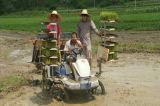 2acg - 6列のKubotaの乗馬の米のTransplanter