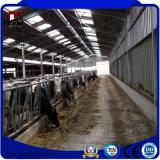Edifícios de exploração agrícola de aço pré-fabricados para a vertente do gado da vertente da vaca
