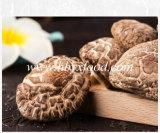 백색 꽃 버섯의 모든 유형
