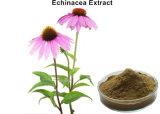 4 % des polyphénols de la poudre extrait d'échinacée
