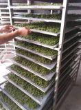 Dessiccateur de nourriture de machines de transformation de fruit et de légumes
