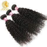 브라질 꼬부라진 Virgin 머리 처리되지 않은 사람의 모발 3개 뭉치 브라질 Virgin 머리 아프로 비꼬인 꼬부라진 Virgin 머리 8A 급료 Virgin