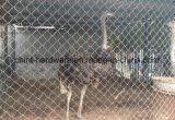 Frontière de sécurité galvanisée bon par prix de maillon de chaîne pour des animaux