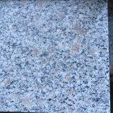 Mattonelle di pietra bianche del mare G614 dello spruzzo bianco poco costoso cinese dell'onda per il pavimento/parete