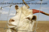 Het Netwerk van de Staaf van de stier/het Gras Gegalvaniseerde Netwerk van de Draad van de Omheining van het Vee
