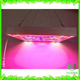 Glebe LED는 가볍게 증가한다, 50W IP65 플랜트는 실내 플랜트 온실과 Hydroponic 증가를 위한 가득 차있는 스펙트럼에 가볍게 증가한다