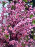 옥외 사용 결혼식 장식 정원 장식 인공적인 벚꽃 나무