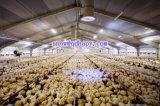 Matériel économique de volaille avec le plan approprié pour des propriétaires
