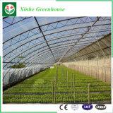 菜園によっては農場のプラスチックフィルムの温室が開花する