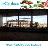 Комната плодоовощей овощей низкой температуры большой емкости большого диапазона свежая держа холодная для области Африки