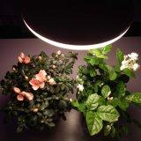 O bulbo quente do diodo emissor de luz da venda cresce claro para plantas internas