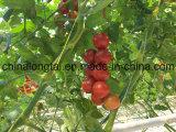 야채 또는 과일을 매기 위하여 온실에서 이용되는 PP 밧줄