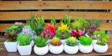 Plantas y Flores artificiales de la suculenta Gu-SD0099