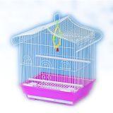 Liebes-Vogel-züchtend Vogel-Rahmen