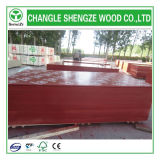 18mm Printed Logo Film Faced Plywood/Construction Plywood/Formwork Plywood/Shuttering Plywood