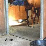 Cala de caballo alfombrillas alfombrilla de goma/vaca/Cow Horse halos
