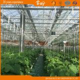 Estufa de vidro para a plantação agricultural