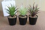 Plantas y flores artificiales de las plantas Gu-Jy1118202300 del Succulent