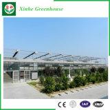 Serres chaudes en verre d'agriculture pour le légume/fleur/jardin