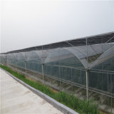 Low Cost Commercial Knell Hydroponic Greenhouse for Pepper