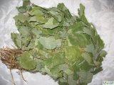 Epimedium corneo P.E. (Icariin 10%-50%) dell'estratto 489-32-7 della polvere del Weed della capra